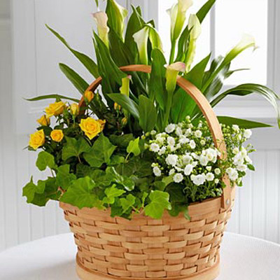 English Ivy, Calla Lillies, Kalachoes and Seasonal Colorful Flowers
