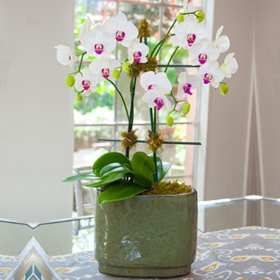 Orchid View
