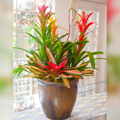 Beautiful Bromeliads