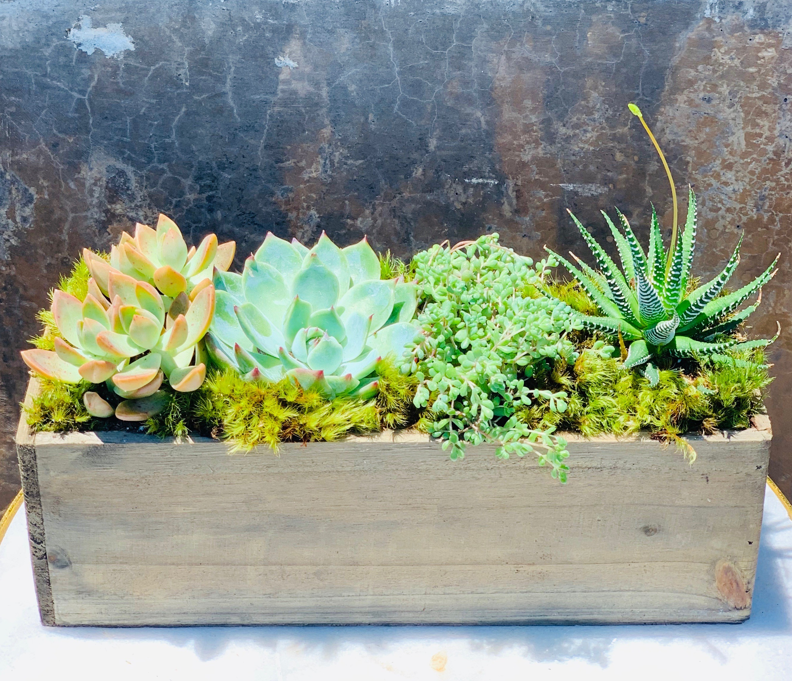 Southern Succulents